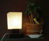 lampa asperatus
